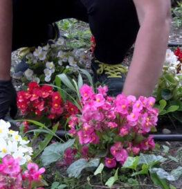 Kwiatowe rozsady